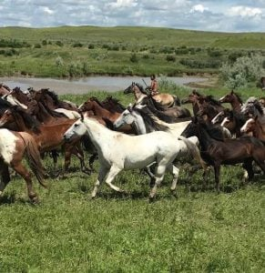 Horses on the Crow reservation, Montana